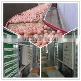 Good quality automatic egg collector with egg collection belt for chicken farm