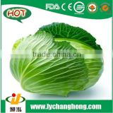 [Hot Sale] prices of white cabbage/white cabbage