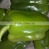 Fresh Capsicum - Special price - High quality