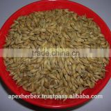 Apex Supplies Quality Barley malt / Hordeum vulgare Malt / Malt Grains Barley /Barley for Malt