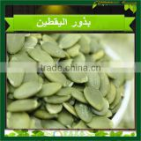 New Crop Pumpkin Kernels High Quality Inner Mongolia