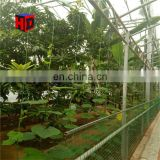 Export to Egypt Banana Greenhouse, Glass Greenhouse for Planting Bananas