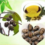 CAS NO.8001-79-4 100% Natural Factory price castor oil for hair carrier oil