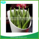 Fresh Organic Okra High quality With Competitive Prices