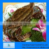 Supply crab competitive price frozen blue swimming crab