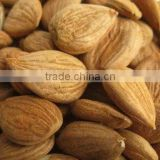 Chinese Bitter Bulk Apricot Kernels with Good Quality
