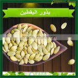 Pumpkin Seeds Kernel Grade AA High Quality