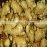 Chinese fresh ginger root for sale