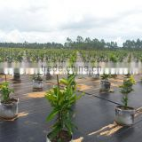 wholesale pp weedmat ground cover for greenhouse                                                                                                         Supplier's Choice