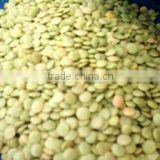 Green Lentils turkish origin