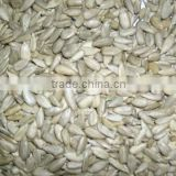 Sunflower seed kernel 2013 crop