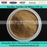 Feed Grade Bacillus Subtilis Probiotics For Aquaculture