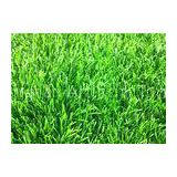 11000Dtex Natural Landscape Synthetic Grass Garden Playground Artificial Grass Weather Resistance