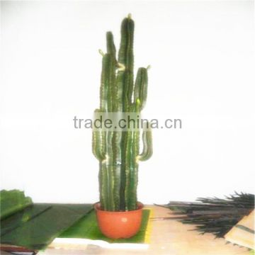 SJM091046 Top-quality wholesale 100% natural hoodia decoration artificial cactus P.E. /prickly pear plant