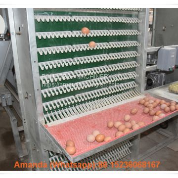 Mexico Poultry Farming A Type Battery Layer Cage & Chicken Cage with 90 Birds with Automatic Feeding Machine