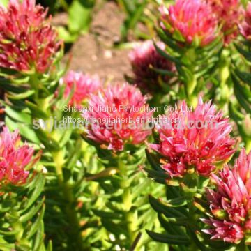 JIAHERB	Rhodiola Rosea Extract lucy@jiaherb.com