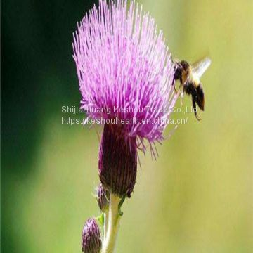 Milk thistle extract,PLANT EXTRACT,Solvent Extraction