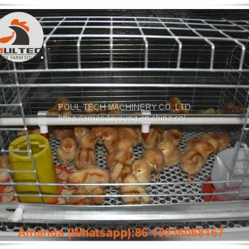 Selling Poultry Farming Baby Chick Cage & Automatic Small Chicken Cage & Pullet Coop with Feed Trough for 5000 Chicks in Chicken Shed in Salvador