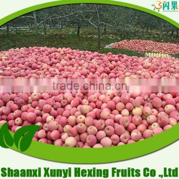 Professional Fruit Supplier fresh fruit exporter from shaanxi