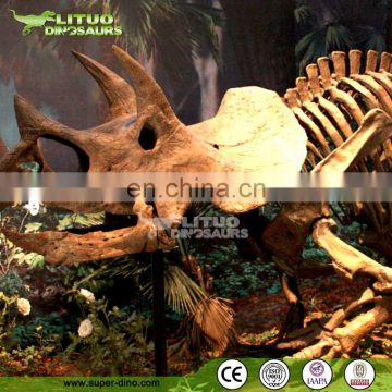 Durable Dinosaur Skeleton In Good Quality On Sale