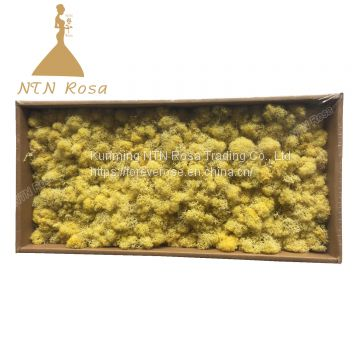 Hot Selling Green Moss Grass Wall for Decoration