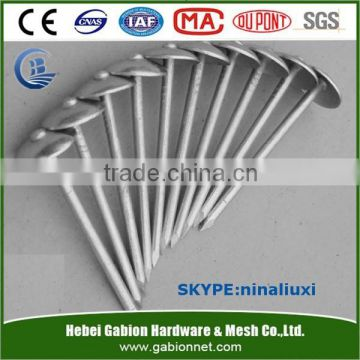 Galvanized roofing nail / roofing nails / corrugated roofing nails manufacturers in ANPING