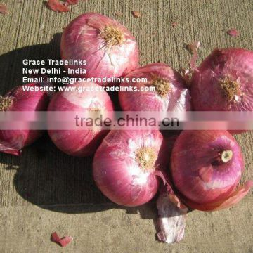 Fresh Red ONION Big Indian Nashik / Nasik Onion for Gulf of FRESH
