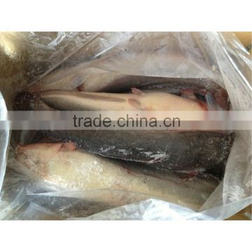 Frozen fresh live catfish on sale from catfish farming of