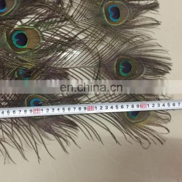 220cm large decorative natural peacock feather fan for party