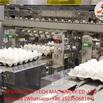 Poultry Farming Automatic Chicken Egg Grading Machine & Egg Packing Machine for Sale