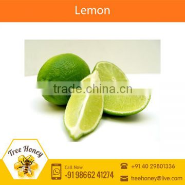 High Quality Fresh Green Bulk Lime/ Fresh Lemon for Middle East