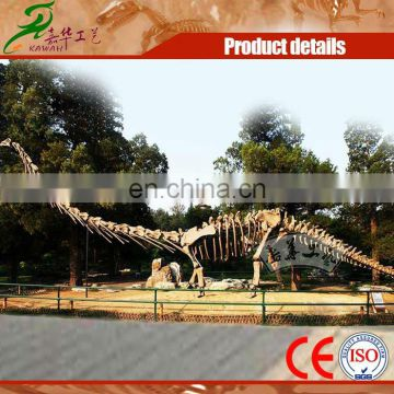 Outdoor dinosaur skeleton statue for display