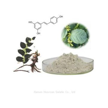 100%Natural Resveratrol Polygonum Cuspidatum Extract Powder
