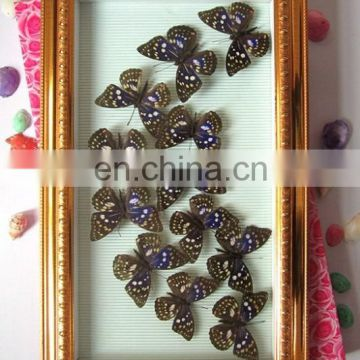 fashion real butterfly frame for gifts