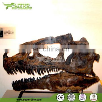 Theme Decoration Attractive Life Size Dinosaur Head Fossil