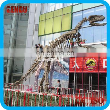 Tyrannosaurus rex fossils for sale