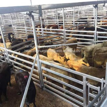 Square Pipe Cattle panels