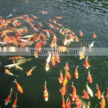 Durable and Enviromental Biological filter for koi pond and Aquarium