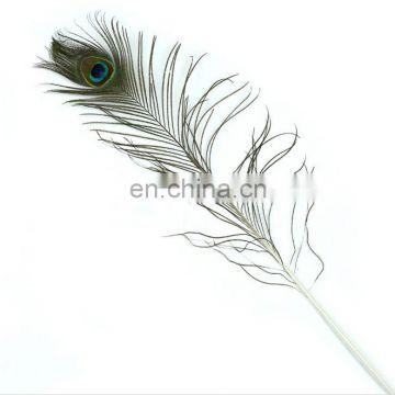 Natural high quality 80-90cm peacock feather