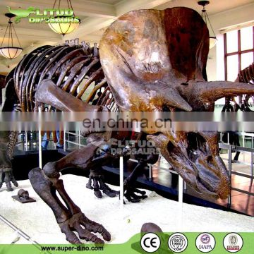 2015 Newest Dinosaur Fossil With Competitive Price