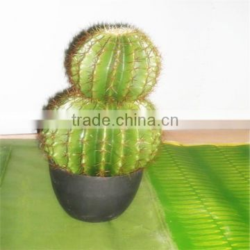 SJM091045 High-quality wholesale 100% natural hoodia decoration artificial cactus P.E. /prickly pear plant