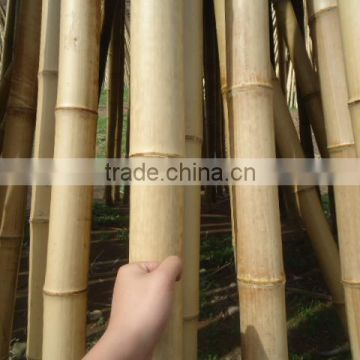 Bamboo Pipe Bamboo post post Ideal for Bamboo Anji Series Nature