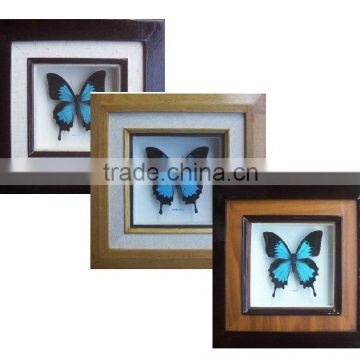 Real Dried Framed Butterfly