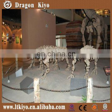 2016 indoor life size simulation dinosaur skeleton for sale