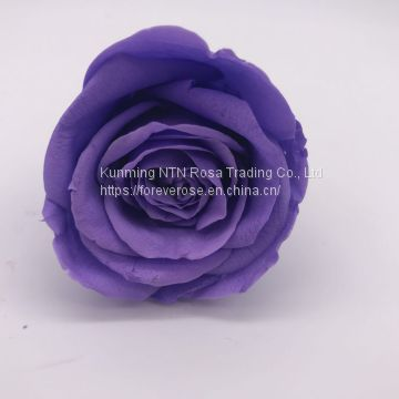 Preserved Fresh Roses Flower for home decoration
