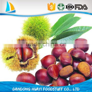 Common Cultivation Type and gunny bag Packaging china raw fresh chestnut