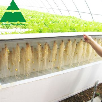 Hydroponic PC Sheet Greenhouse for Cucumber/Tomato/Lettuce