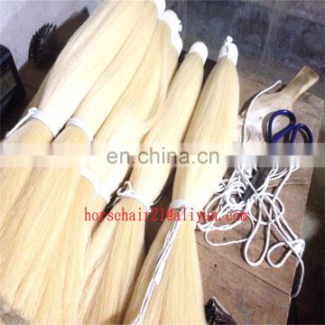 Blunt cut bottom horsetail hair ( double drawn Tail hair ) horse tail hairs for sale
