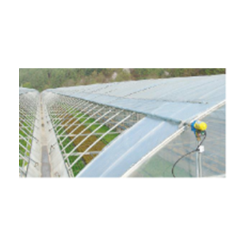 Plastic Film Greenhouse for Large-Scale Butterfly Orchid Planting