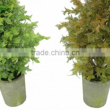 hot selling narture green bougainvillea bonsai for garden decoration